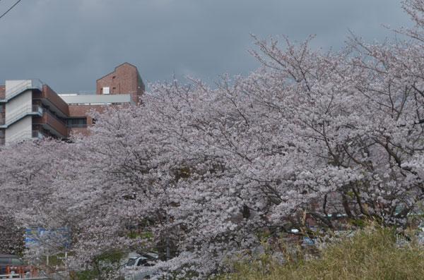 Shizuoka children's hospital